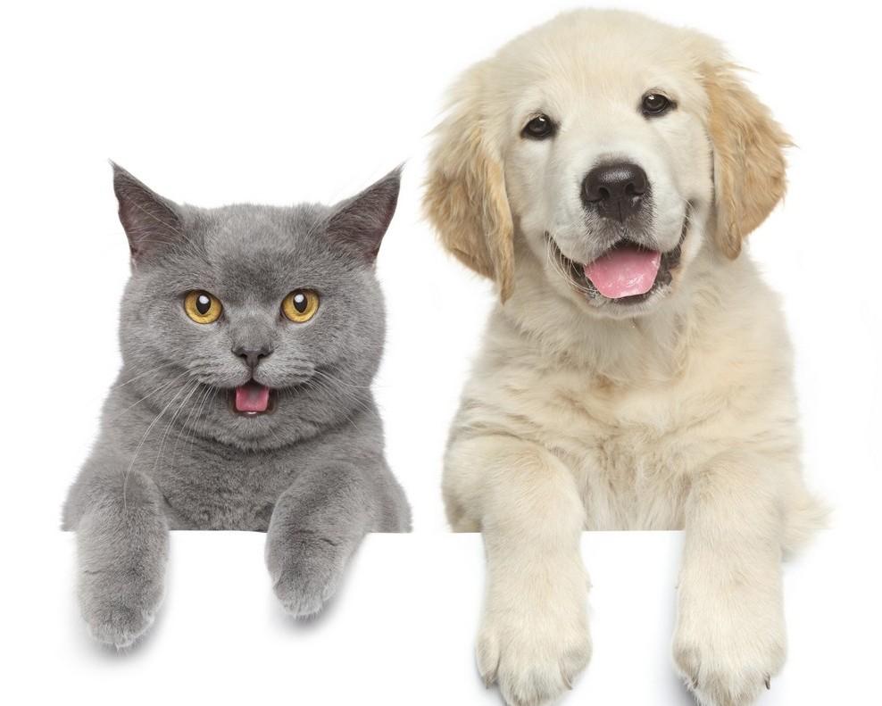caini-si-pisici-iubirea-pentru-stapan-e1454674581980