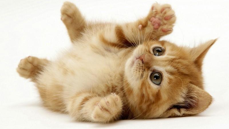 pisica-mica-jucausa-800x450